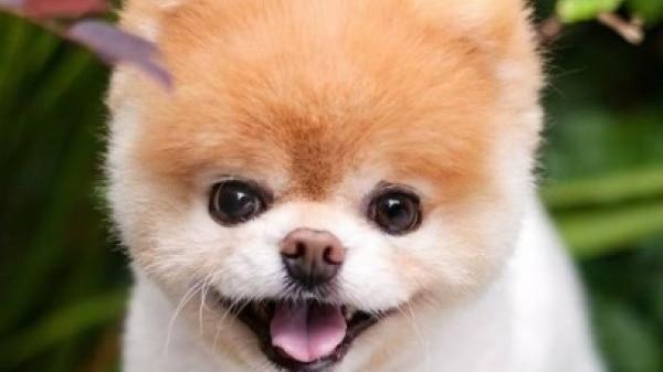 Sucesso no Instagram, cãozinho morre aos 12 anos de idade