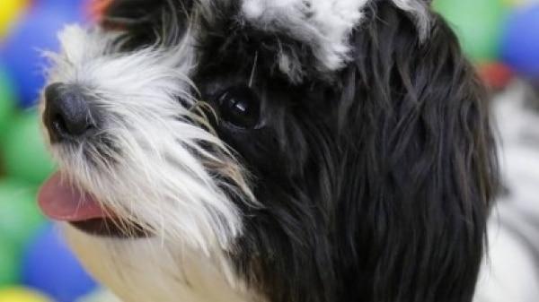 Confira programação gratuita para pets