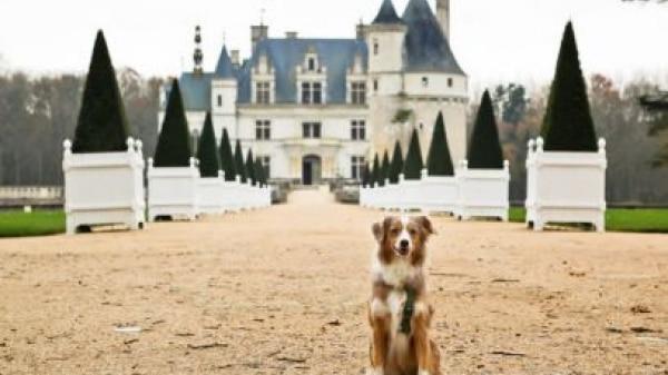 Onde se hospedar com seu cachorro nos EUA?