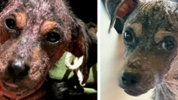Atriz mostra evolução de cadela adotada