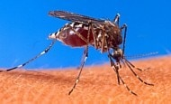 Saiba como é possível se proteger do zika vírus