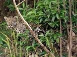Brasil está à beira da maior extinção de espécies da história