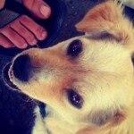 Instagram-fotoquatroanos630