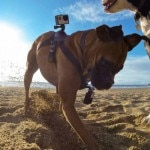 gopro-fetch-630