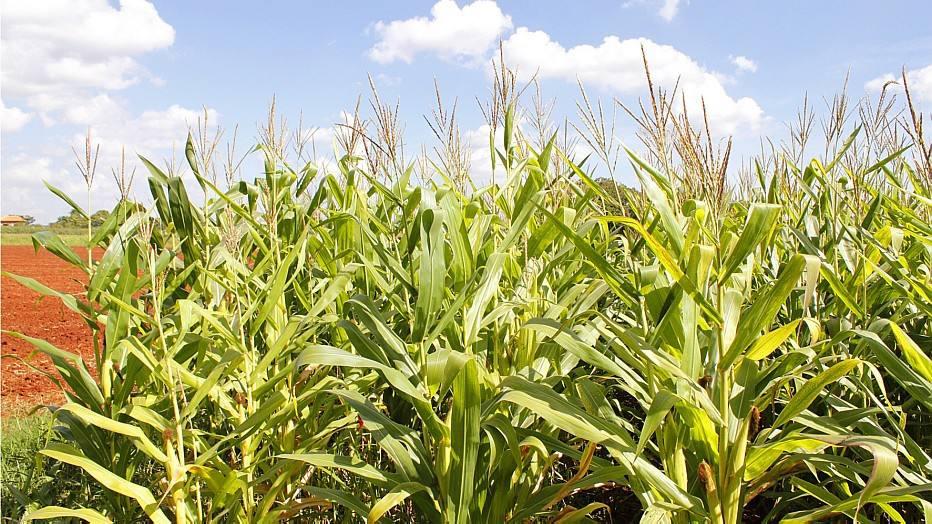 Agrotóxicos colocam sob alerta 25% dos alimentos, diz Anvisa