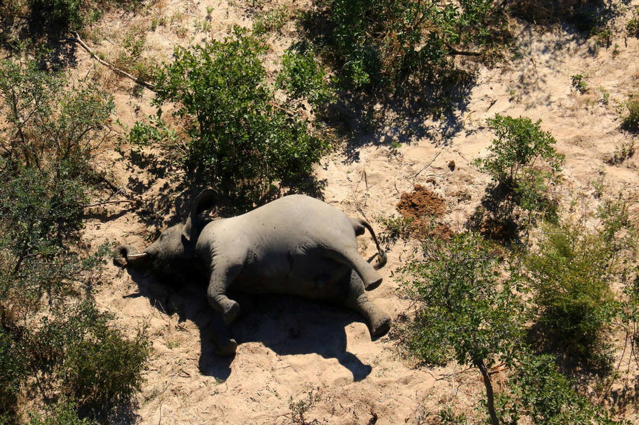 ctv-sbs-a-dead-elephant