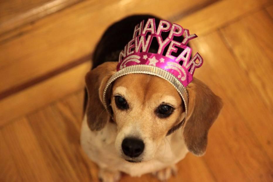 As suas resoluções para o novo ano incluem o seu animal de estimação?Confira dicaspara dedicar mais tempo de qualidade ao seu amigo