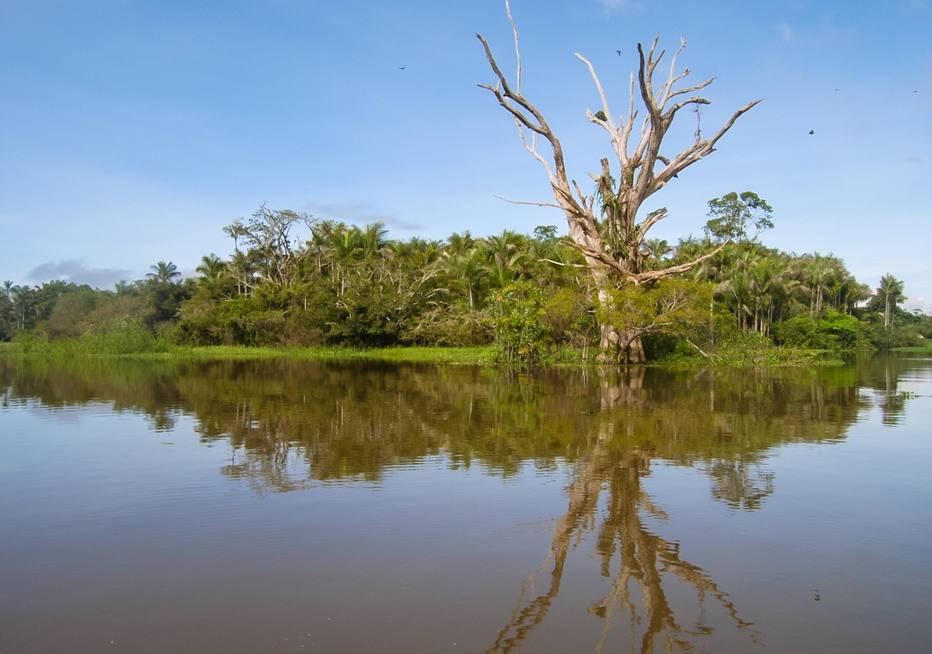 Áreas úmidas da Amazônia