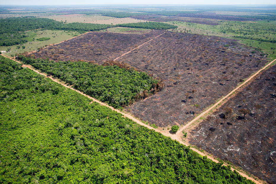 Na foto, área desmatada para agricultura em Mato Grosso