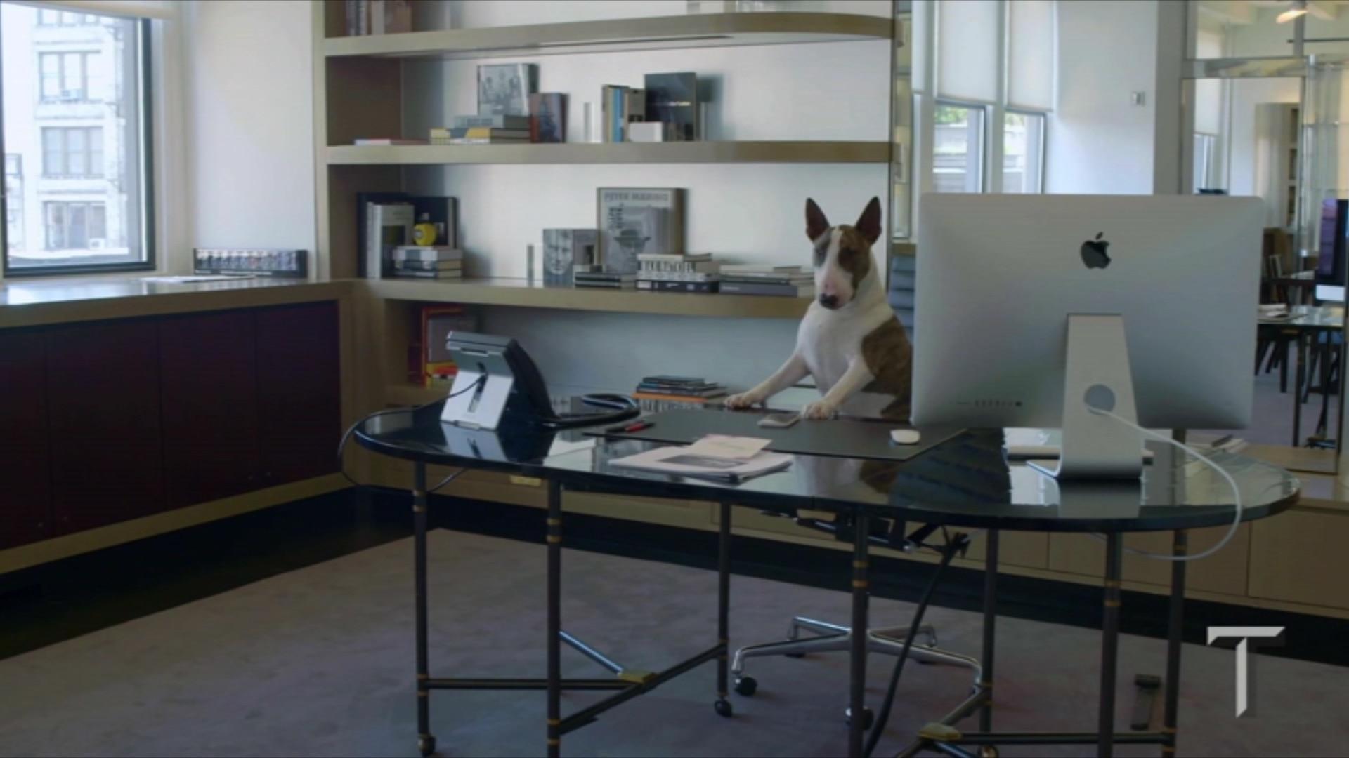 Um dia na vida do cachorro mais trabalhador da moda