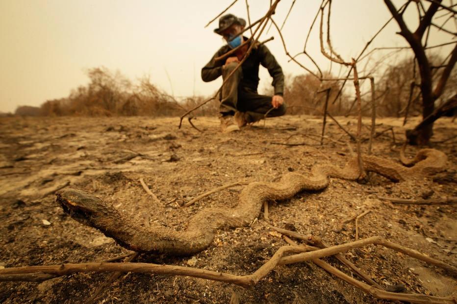 Pantanal em chamas