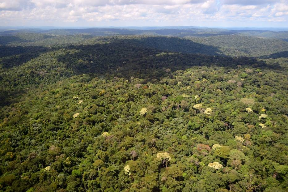 Florestal Nacional do Jamanxim, na Amazônia