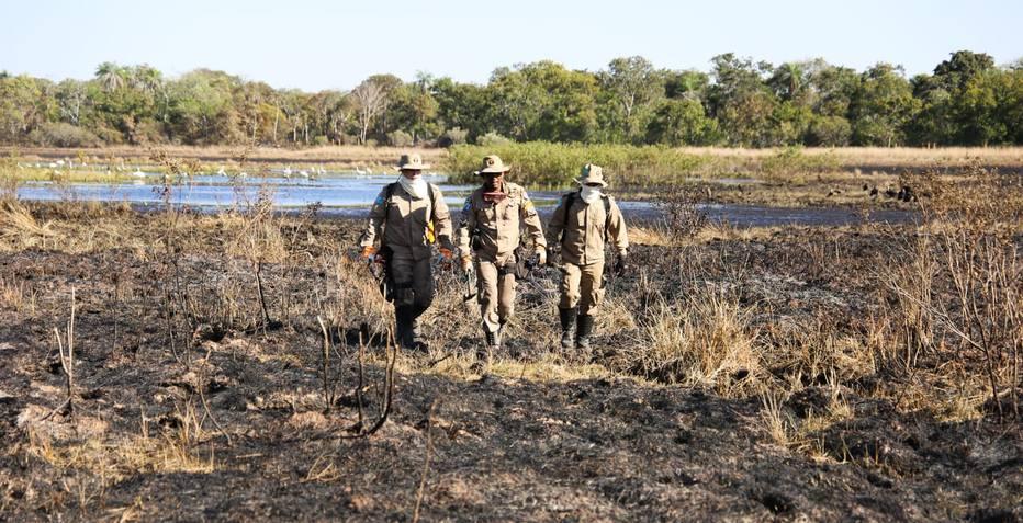 ctv-ppc-bombeiros-percorrem-rea-queimada-em-busca-de-animais-atingidos-pelo-fogo