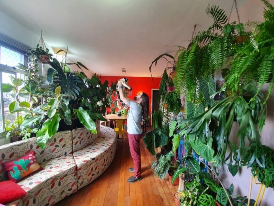 As plantas suspensas estão em fazendo sucesso entre os jardineiros domésticos, pois diversas espécies se adaptam bem ao cultivo eminteriores.Descubra as que são ideais para sua casa - e como cuidar delas.
