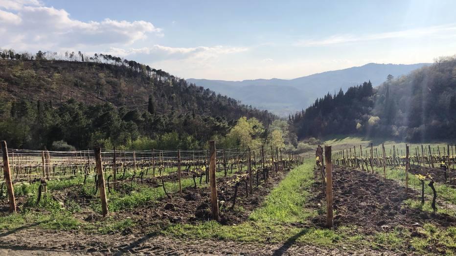 Um roteiro em meio ao sol e aos vinhedos da Toscana, na