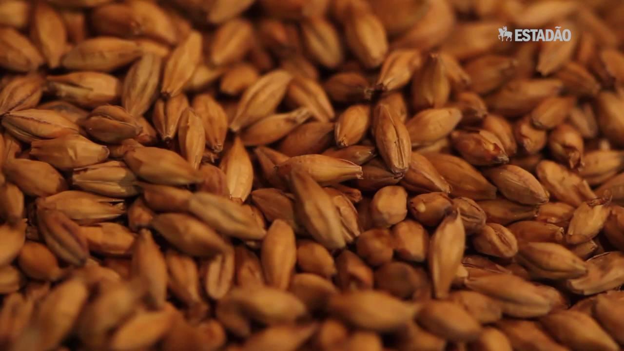 Cevada: conheça os benefícios do alimento para o organismo