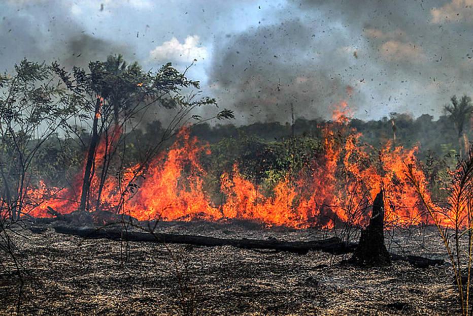 Queimadas deixam marcas profundas na Amazônia