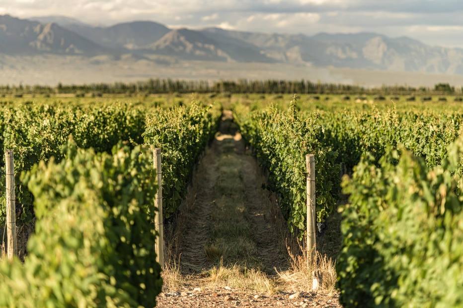 Um roteiro para provar vinhos Malbec com desconto