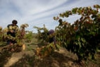 Em Puente La Reina, os repórteres passaram por lindas vinícolas. Até agora, já tiveram a oportunidade de degustar amoras, nozes, maçãs e pêssegos colhidos direto dos pés.