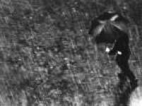 Pedestre enfrenta forte chuva na região central da capital paulista. SP. 24/01/1964.