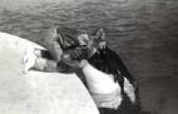 Diretamente do Sea World, as orcas foram atração no parque em 1986.