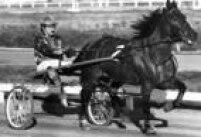 <a href='http://acervo.estadao.com.br/noticias/acervo,fotos-historicas-corrida-de-trote,11459,0.htm' target='_blank'>Clube Hípico da Vila Guilherme</a>foi o primeiro do País a promover corrida de cavalos em charretes