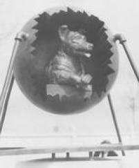 Detalhe do monumento erguido em homenagem à Laika