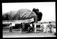 """Caminhão transpotando boneco de King Kong chega ao Playcenter, 1979.Faixa no caminhão que transportava a atração King Kong dizia """" Estamos transportando o King King diretamente de Hollywood para o Playcenter em São Paulo"""""""