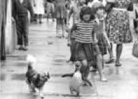 Em 10 de janeiro de 1965, o Estado publicou a história de Zé, um<a href='http://acervo.estadao.com.br/noticias/acervo,fotos-historicas-ze-o-pinguim-da-lapa,11174,0.htm' target='_blank'>pinguim que vivia com uma família</a>humilde no bairro Lapa. O animal fora encontrado por um grupo de pescadores na Praia Grande, litoral sul de São Paulo, e levado para capital. Foto: Acervo/Estadão