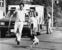 <a href='http://acervo.estadao.com.br/noticias/acervo,fotos-historicas-o-homem-da-carrocinha,11311,0.htm' target='_blank'>Veículo e laçadore</a>s que capturavam animais de rua eram recebidos a pedradas por moradores