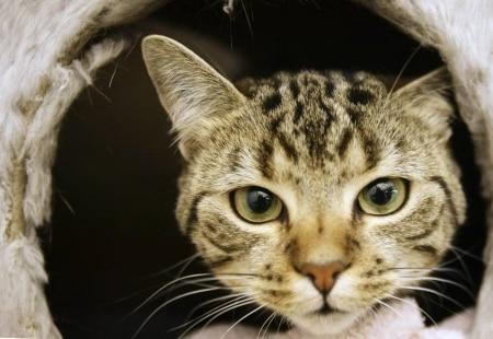 https://link.estadao.com.br/noticias/cultura-digital,seu-gato-leva-animais-mortos-para-casa-uma-inteligencia-artificial-pode-resolver-isso,70002898825