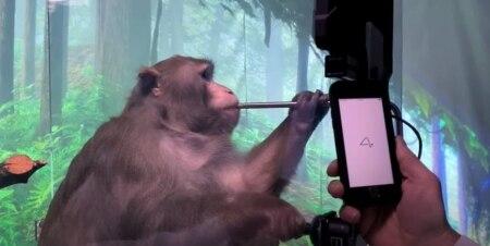 https://link.estadao.com.br/noticias/empresas,com-chip-no-cerebro-macaco-da-neuralink-joga-pong-com-o-poder-da-mente-assista,70003675922
