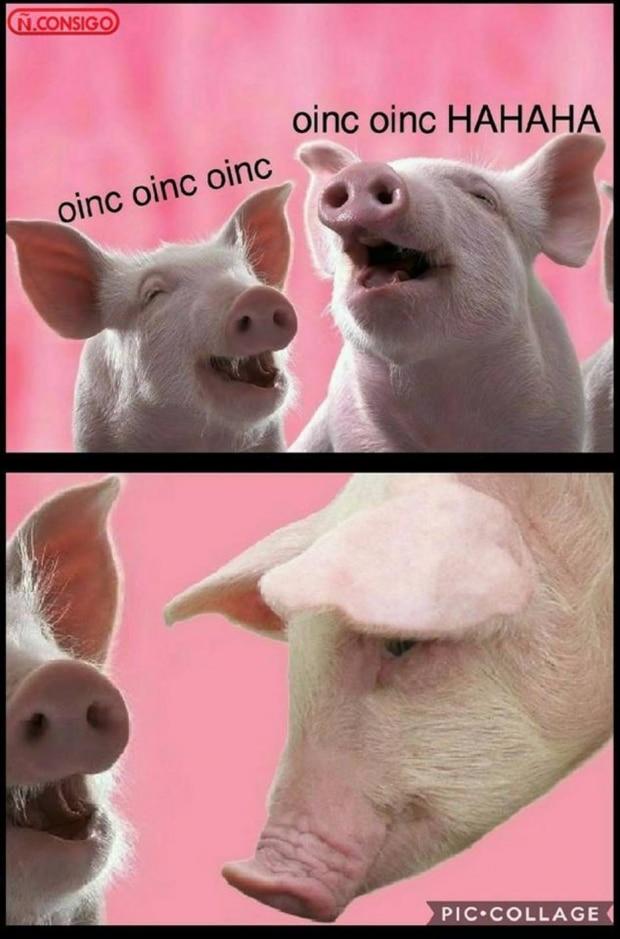 Risada de Porco