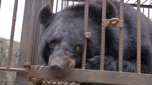 Uma família chinesa tomou um susto quando descobriu que seu filhote de cachorro na realidade se tratava de um urso