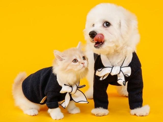 Todos os cães e gatos disponíveis para adoção já estarão devidamente castrados, vacinados e vermifugados.