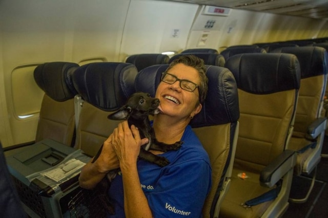 Cães e gatos de um abrigo fugiram do furacão Harvey em voo especial