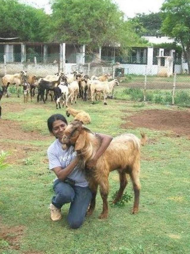 Shiranee tem uma fazenda de 38 mil metros quadrados em que abriga todos os animais que resgata.