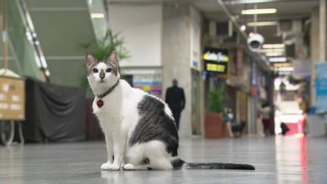 Tutor de Rubinho acionou a Justiça para garantir que o gato circulasse livremente pela galeria no Rio de Janeiro.