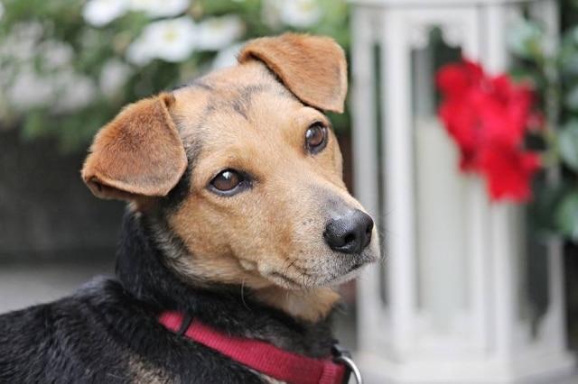 Cachorros não enxergam as cores? Cientista diz que um dos conhecimentos mais difundidos sobre os cães está errado.
