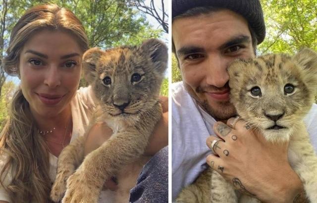 Grazi Massafera e Caio Castro postaram fotos ao lado de filhote de leão