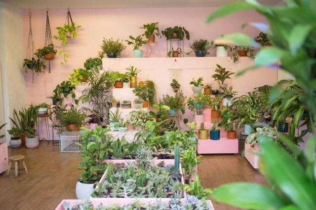 Conhecimentos básicos sobre o local destinado à planta garantem sucesso no seu cantinho verde