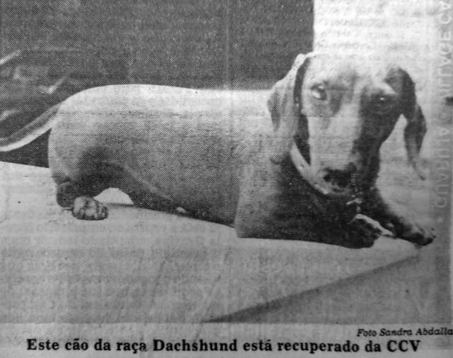 Paciente em plena recuperação em 1988.Foto: Acervo/EstadãoClique aqui para ver mais