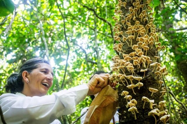 Neide Rigo, colunista do'Paladar', em expedição para coletar cogumelos silvestre na Ilha do Cardoso.