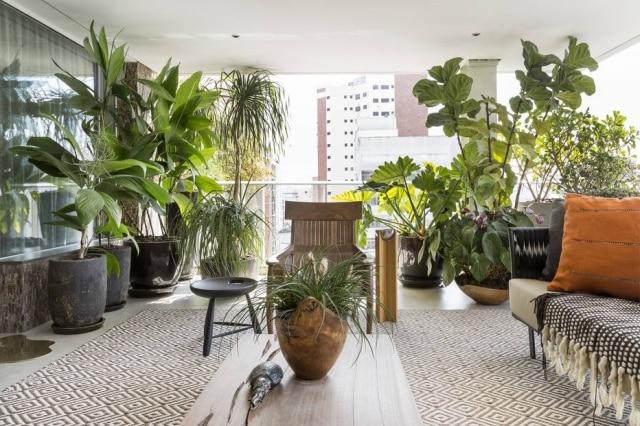 Espécies tropicais podem se incorporar à decoração