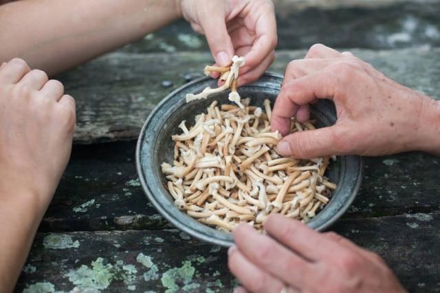 É comestível? Não há característica visual que possa ser usada para diferenciar os cogumelos comestíveis dos tóxicos.