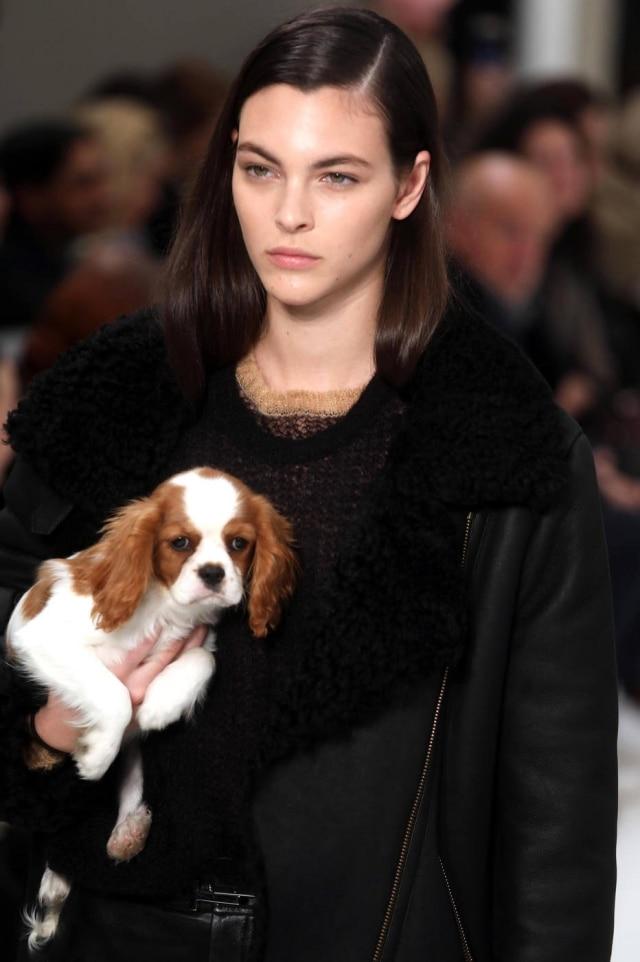 Cavalier foi uma das raças de cachorro escolhidas para fazer parte do desfile da Tod's