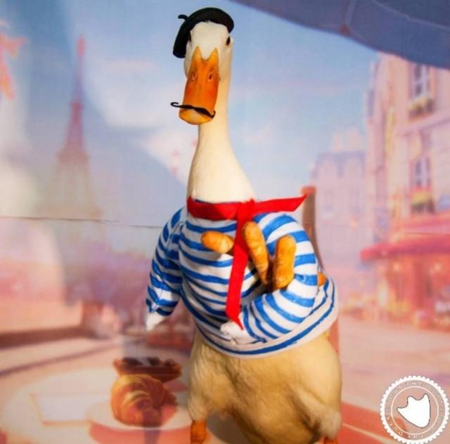 Guus, o pato que faz sucesso no Instagram.