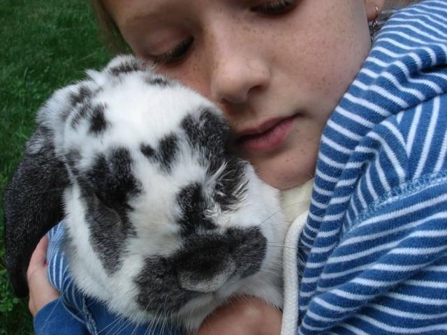 Apesar de fofinhos, alguns tutores reclamam que os coelhos podem apresentar certa agressividade.