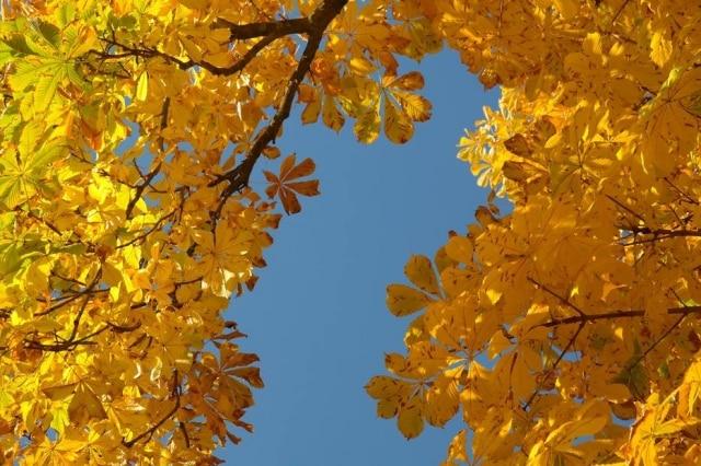 A cor amarela tem o simbolismo da vida, da luz e do sol, o que reflete o propósito da campanha de preservação da vida humana.