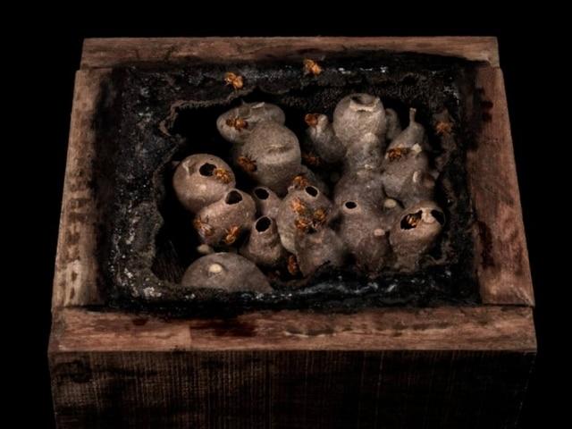 Imagem de colmeia de abelhas nativas, parte da exposição de Sergio Coimbra